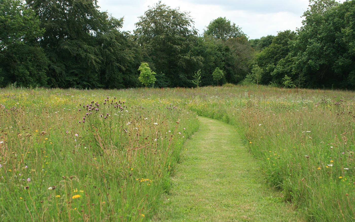 A Modern Wildflower Garden - Landscape design project by Susannah McDougall, Norfolk